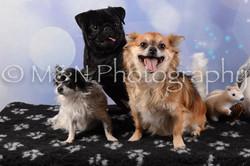 M&N Photography -DSC_6629