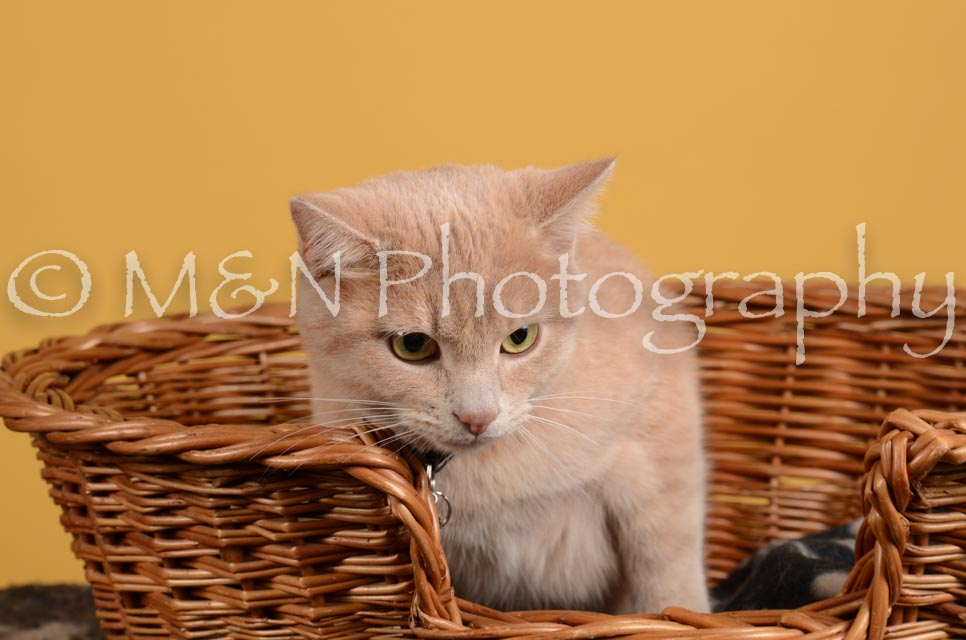 M&N Photography -DSC_4801