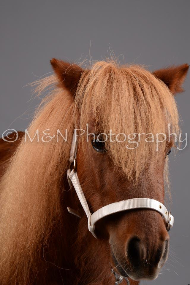 M&N Photography -DSC_2465