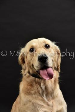 M&N Photography -DSC_2618