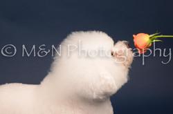 M&N Photography -DSC_3894