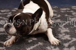 M&N Photography -DSC_0681