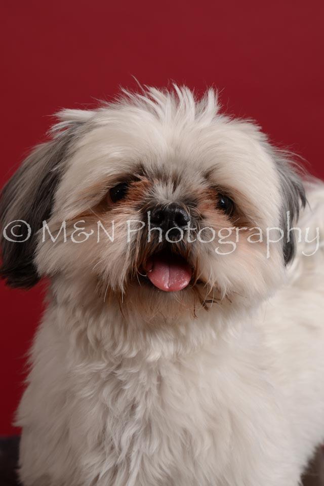 M&N Photography -DSC_3510
