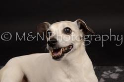 M&N Photography -DSC_0107