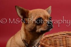 M&N Photography -DSC_8667