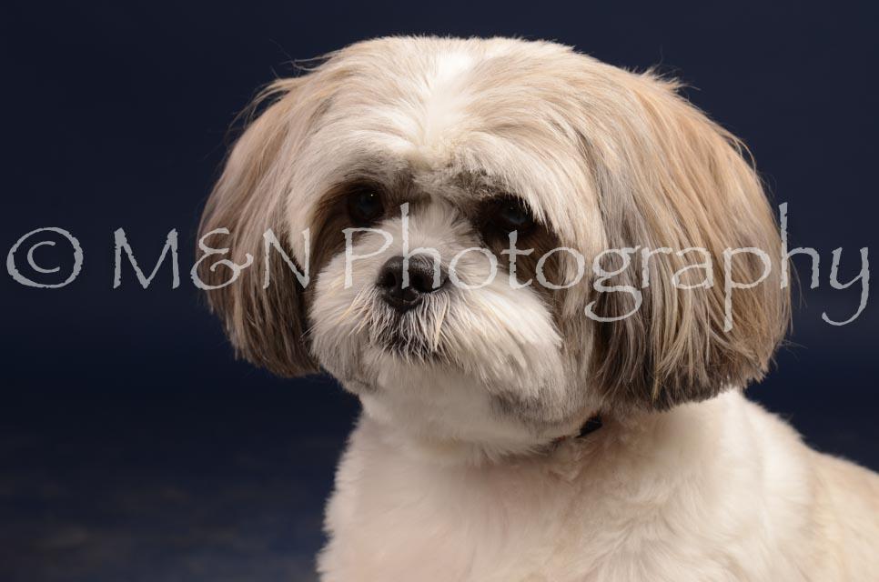 M&N Photography -DSC_0724