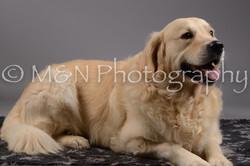 M&N Photography -DSC_1573