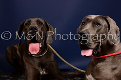 M&N Photography -IMG_4624
