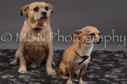M&N Photography -DSC_2176