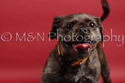 M&N Photography -DSC_8493