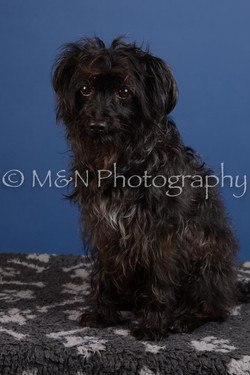 M&N Photography -DSC_4992