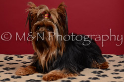 M&N Photography -DSC_3559