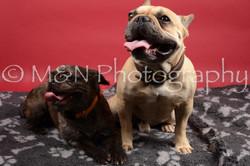 M&N Photography -DSC_8504
