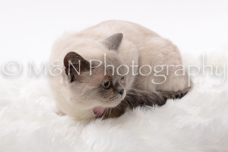 M&N Photography -DSC_8797