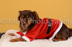 M&N Photography -DSC_4853