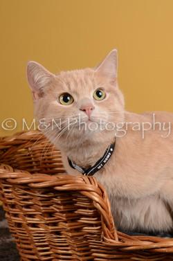 M&N Photography -DSC_4800