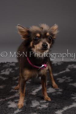 M&N Photography -DSC_2241