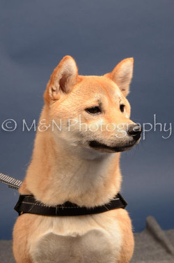 M&N Photography -DSC_4323