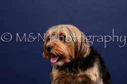 M&N Photography -IMG_4569