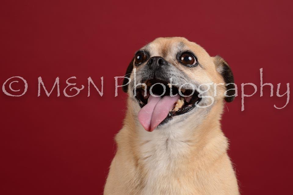 M&N Photography -DSC_3735
