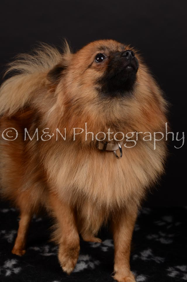M&N Photography -DSC_5855