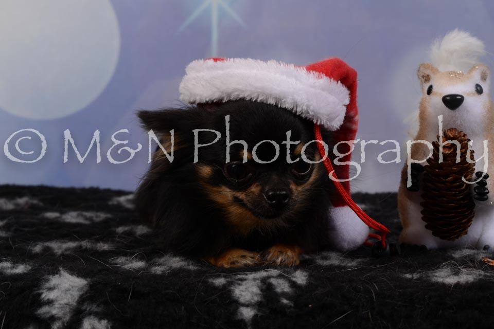 M&N Photography -DSC_6793