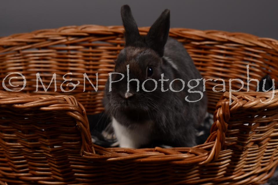 M&N Photography -DSC_2203