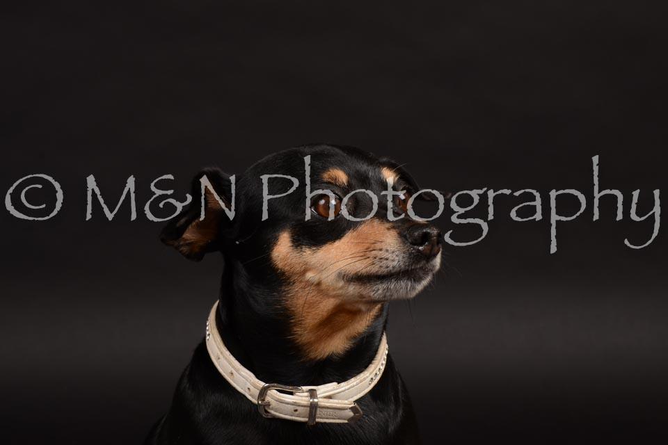 M&N Photography -DSC_9653