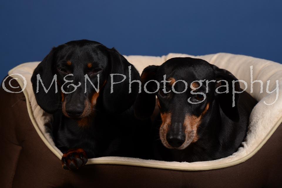 M&N Photography -DSC_5370