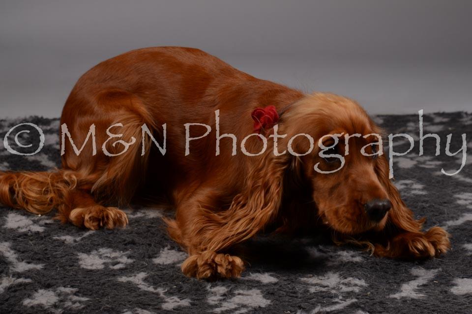 M&N Photography -DSC_1951