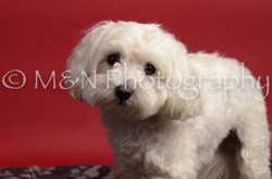 M&N Photography -DSC_8638-2-2