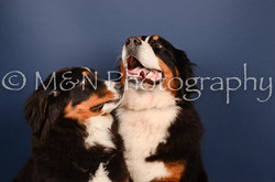 M&N Photography -DSC_3828
