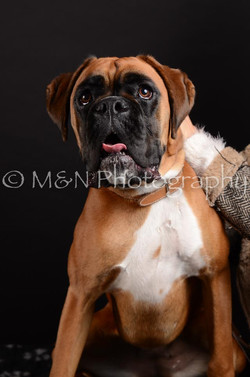 M&N Photography -DSC_5919