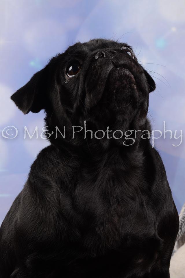 M&N Photography -DSC_6600