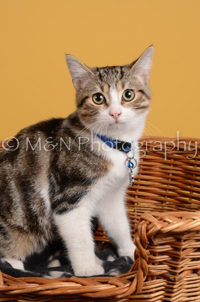 M&N Photography -DSC_4791