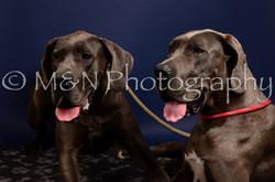 M&N Photography -IMG_4625