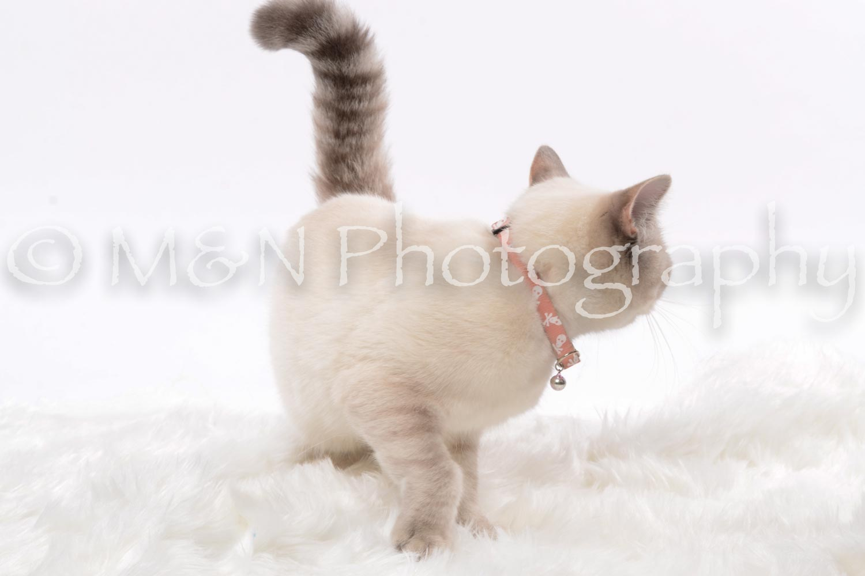 M&N Photography -DSC_8803
