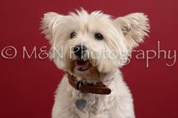 M&N Photography -DSC_3576