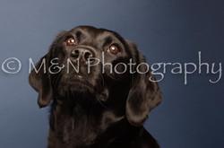 M&N Photography -DSC_4331