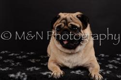 M&N Photography -DSC_5975