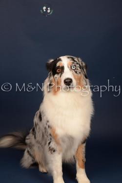 M&N Photography -DSC_4005