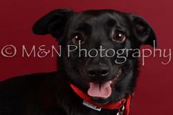 M&N Photography -DSC_3731