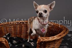 M&N Photography -DSC_2189