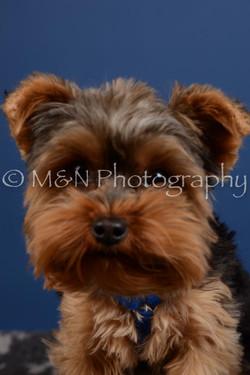 M&N Photography -DSC_5225