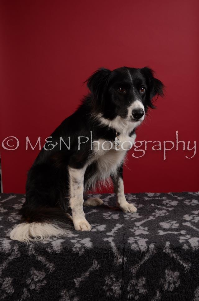 M&N Photography -DSC_3453