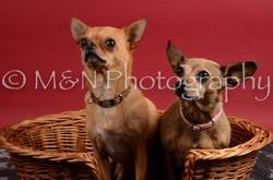 M&N Photography -DSC_8671