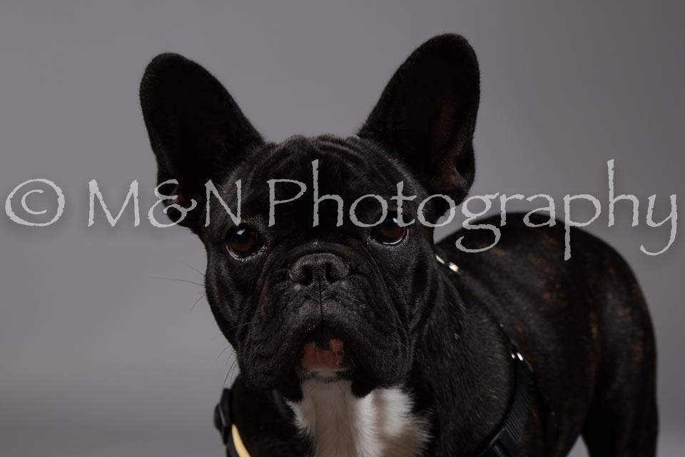 M&N Photography -DSC_1728
