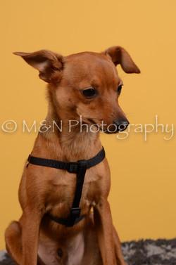 M&N Photography -DSC_4593