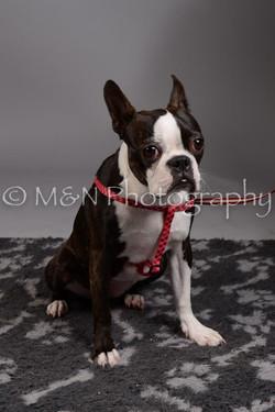 M&N Photography -DSC_2398