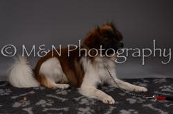 M&N Photography -DSC_2307